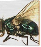 Forensic Helper, Common Green Bottle Wood Print