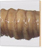 Forensic Helpers, Black Blow Fly Maggot Wood Print