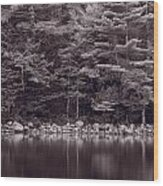 Forest At Jordan Pond Acadia Bw Wood Print