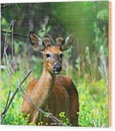 Forest Buck Wood Print