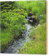 Forest Creek In Newfoundland Wood Print