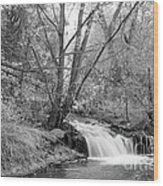 Forest Creek Waterfall In Black And White Wood Print
