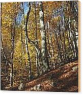Forest Fall Colors 4 Wood Print