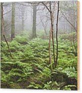 Forest Ferns On A Foggy Morning Wood Print