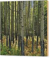 Forest Floor In Autumn, Bow Valley Wood Print