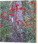 Forest Flowers Bhuping Palace Wood Print