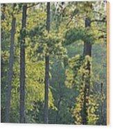 Forest Illumination At Sunset Wood Print