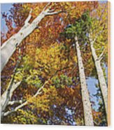 Forest In Autumn Bavaria Germany Wood Print