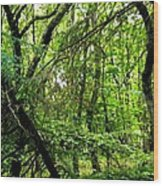 Forest In Denmark Wood Print