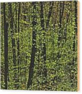 Forest In Spring Foliage, Six Mile Lake Wood Print