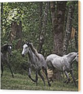 Forest Mares Wood Print
