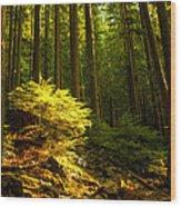 Forest Wood Print by Matt  Trimble
