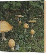 Forest Mushrooms Sprout Wood Print