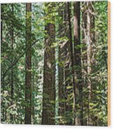 Forest Of Clover Wood Print