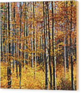 Forest Of Gold Wood Print