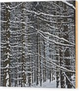 Forest Of Marburg In Winter Wood Print