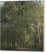 Forest Path 1 Wood Print