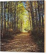 Forest Path In Autumn Wood Print