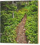 Forest Path In Newfoundland Wood Print by Elena Elisseeva