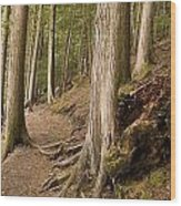 Forest Pathway, Whistler, British Wood Print