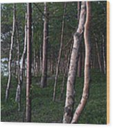 Forest, Shore Of Lake Superior Wood Print