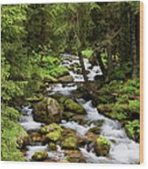 Forest Stream In Tatra Mountains Wood Print
