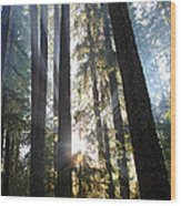 Forest Sun Rays In Olympic National Park Wood Print