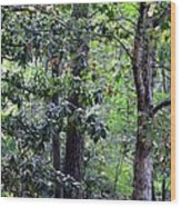 Forest Trees Wood Print