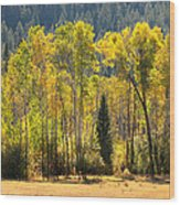 Forested Light Wood Print