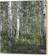 Forever Aspen Trees Wood Print
