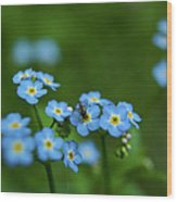 Forget-me-nots In Treman State Park, Ny Wood Print