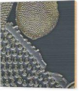 Fossil Diatoms, Light Micrograph Wood Print by Frank Fox