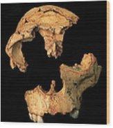 Fossilised Skull, Gran Dolina Wood Print