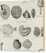 Fossils Wood Print