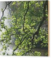 Fountain Behind Tree Branches Wood Print