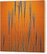 Fountain Grass In Orange Wood Print