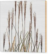Fountain Grass In White Wood Print by Steve Gadomski