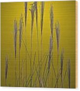 Fountain Grass In Yellow Wood Print