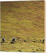 Four Sheep Wood Print