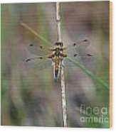 Four-spotted Chaser Dragonfly 3 Wood Print