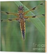 Four-spotted Chaser Dragonfly 4 Wood Print