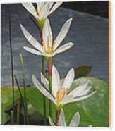 Four Tall Marsh Grass Blooms Wood Print