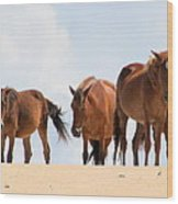 Four Wild Mustangs Wood Print