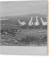 Fox & Geese, 19th Century Wood Print