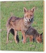 Fox And Baby Wood Print