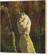 Fox Squirrel Sitting On Cypress Knee Wood Print