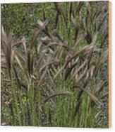 Fox Tail Grass Wood Print by Grover Woessner