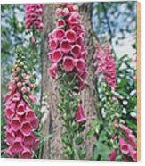 Foxglove Flowers Wood Print
