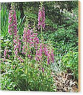 Foxgloves In My Garden Wood Print