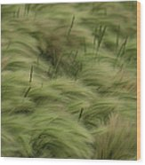 Foxtail Barley And Western Wheatgrass Wood Print